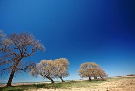 lake winnipeg: Bare trees along shore of Lake Manitoba