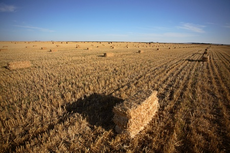 Straw bales in a Saskatchewan field Stock Photo - 8451184