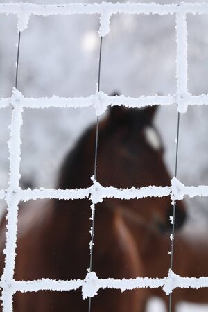 Horse viewed through frost covered wire fence Stock Photo - 8451099