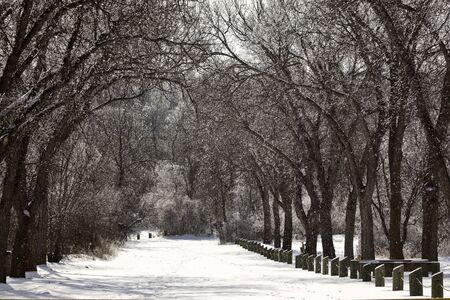 winter road: Snow covered road in Wakamow Park in Moose Jaw