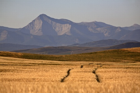 High Plains with Rocky Mountains in the distance Stock Photo - 8461872