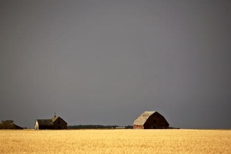 Dark skies behing abandoned homestead and wheat field Stock Photo - 8461425