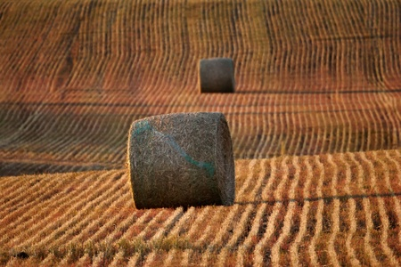 Straw bales in Saskatchewan stubble field Stock Photo - 8461414