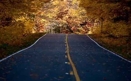 Autumn Trees fall Michigan colors beautiful red orange Stock Photo - 8482394