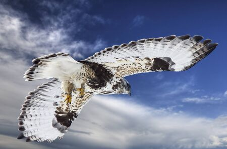 Rough Legged Hawk Saskatchewan Canada against sky photo