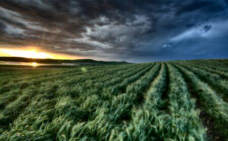 durum: coucher de soleil nad dur nuages ??r�colte de bl� de temp�te