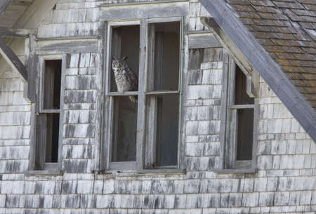 Abandoned Farm with Great Horned Owl Canada