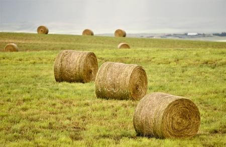 Rural Saskatchewan in summer with crops Canada Stock Photo - 12919106
