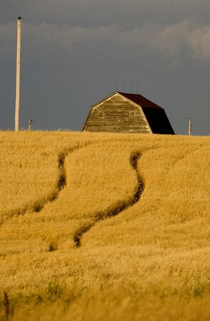 Rural Saskatchewan in summer with crops Canada Barn Stock Photo - 12919128