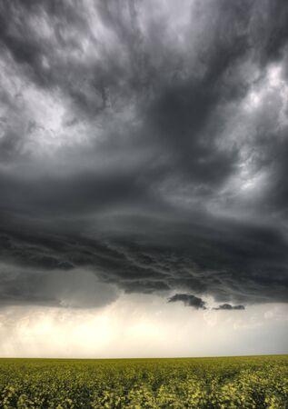 Storm Clouds Saskatchewan yellow bright canola field Stock Photo - 16226491