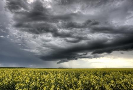 Storm Clouds Saskatchewan yellow bright canola field Stock Photo - 16229636