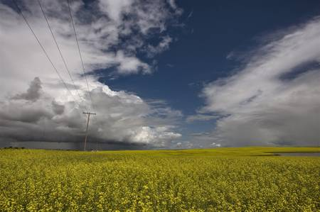Storm Clouds Saskatchewan Canola field yellow color Stock Photo - 16230896