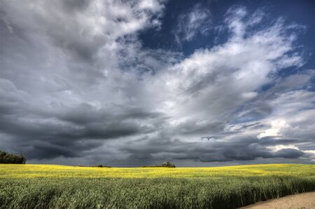 Storm Clouds Saskatchewan Canola field yellow color Stock Photo - 16229198