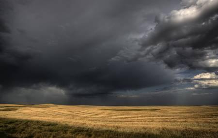 Storm Clouds Saskatchewan over combined canola field Stock Photo - 16228666