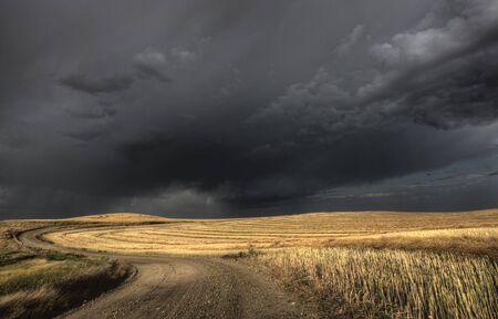 Storm Clouds Saskatchewan over combined canola field