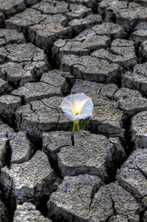 dryness: Dried up River Bed and flower