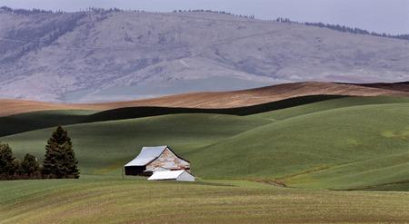 palouse: Palouse scenic Washington area farmland in spring