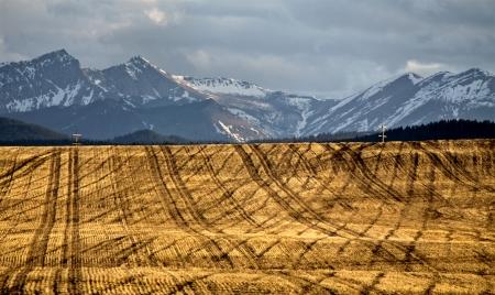 Crop harvest Canada Pincher Creek Rocky Mountains