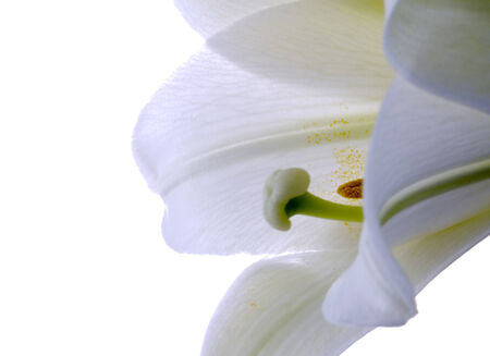 Close up lily white in studio with natural lighting Stock Photo