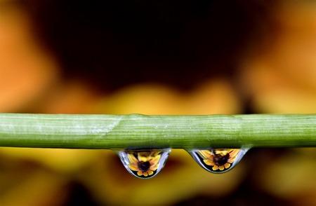 Macro water drops flower reflection