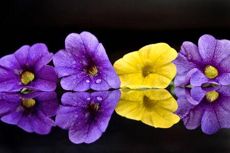나팔꽃 꽃을 가까이에서 스톡 콘텐츠 - 29345055
