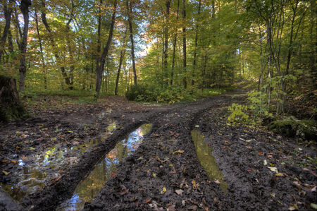 muddy tracks: Muddy Road in Autumn tire tracks and trees Stock Photo