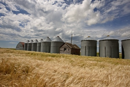 storage bin: Row of Granaries in Manitoba Canada Prairie Stock Photo