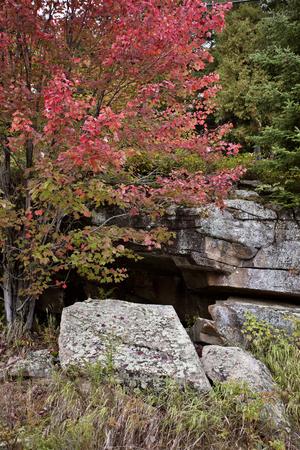 muskoka: Algonquin Park Muskoka Ontario fall autumn colors Stock Photo