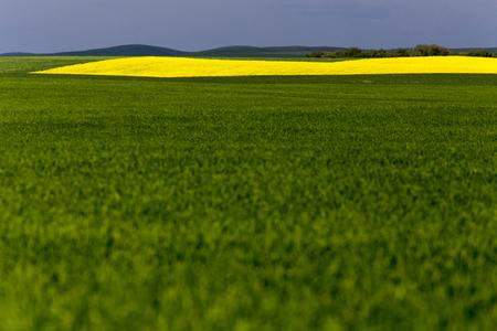 Saskatchewan Field Farming in yellow and Green