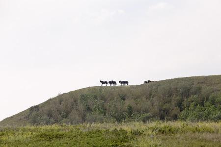 Horses on Ridge in Saskatchewan canada scenic beauty