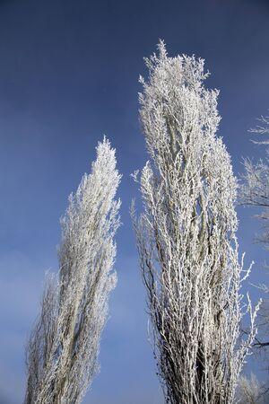 Hoar Frost Prairie in Saskatchewan Canada winter Cold
