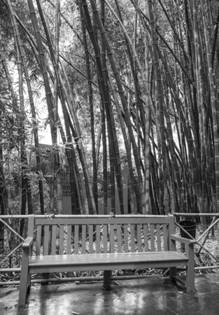 Bamboo forest in black and white with bench Stok Fotoğraf