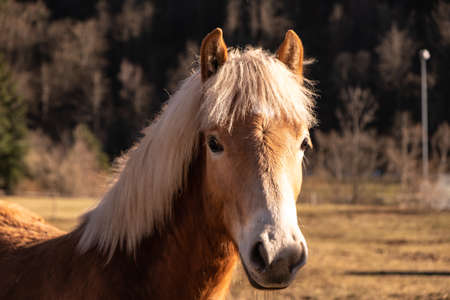 young horse in the February sun