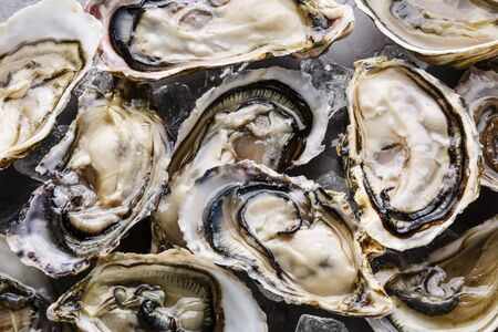 Oysters background with Open Oyster and ice