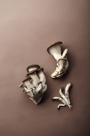 Oyster mushrooms on brown background. Natural lighting, copy space. Monochromatic concept