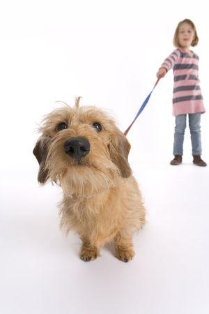 dog on leash: Perrito en busca curioso en la c�mara Foto de archivo