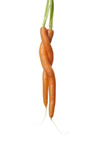 inseparable: Two Carrots Entwined On White Background With Room For Text