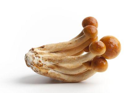 Volvariella volvacea, straw mushroom photo