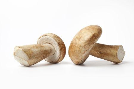 porcini: Boletus edulis, Porcini