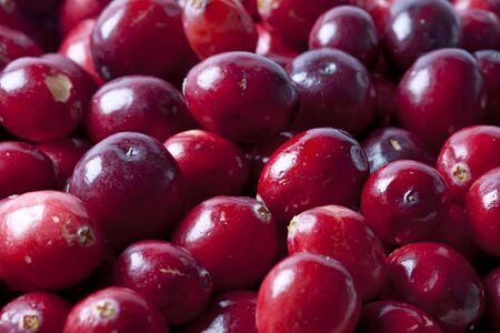 Cranberries full frame Stock Photo - 6267290