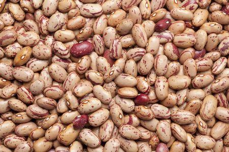 vulgaris:  Pinto beans ,Phaseolus vulgaris full frame