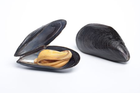 mussels: Open and closed mussel on white background