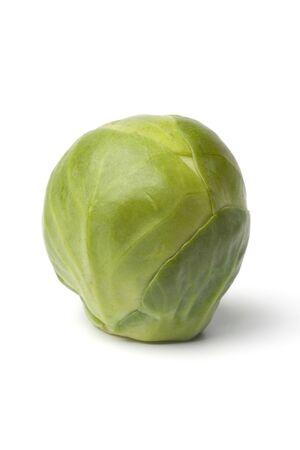 brussel: One single whole Brussel sprout on white backgpound