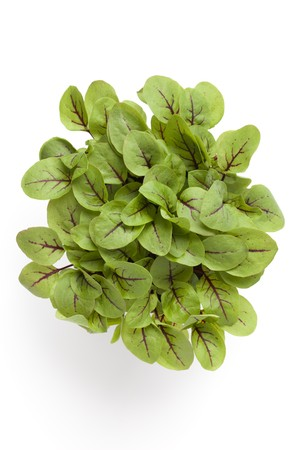 Leaves of red veined sorrel isolated on white background Stock Photo - 7428654