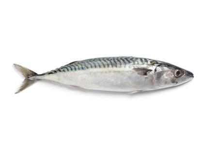 Whole single fresh mackerel fishes on white background Stock Photo