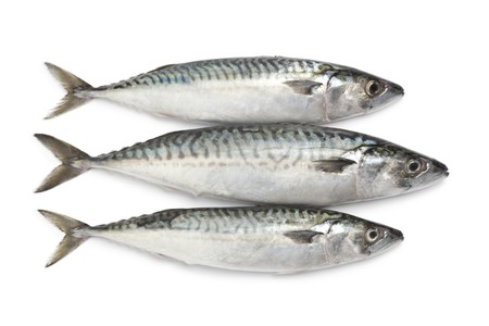 mackerel:  Fresh mackerel fishes on white background