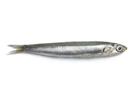 anchovy fish: Whole single fresh raw European anchovy isolated on white background Stock Photo