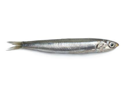 Whole single fresh raw European anchovy isolated on white background Stock Photo - 7641914