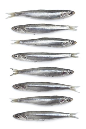 Whole fresh raw European anchovy on white background photo