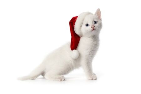 Cute white kitten with blue eyes and Christmas hat on white background Stock Photo